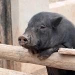 Smart Pig uses PLR!